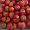 Tomate Cœur de Bœuf SweetHeart