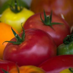 Tomate Mélange